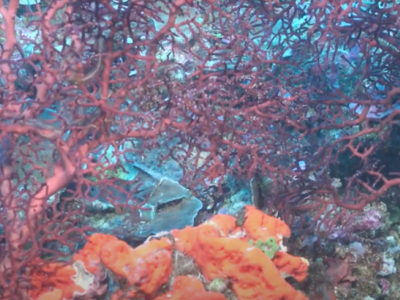 Scientists Discover a New Coral Reef