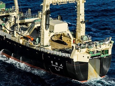 Sea Shepherd Stops Pursuit of Japanese Whalers